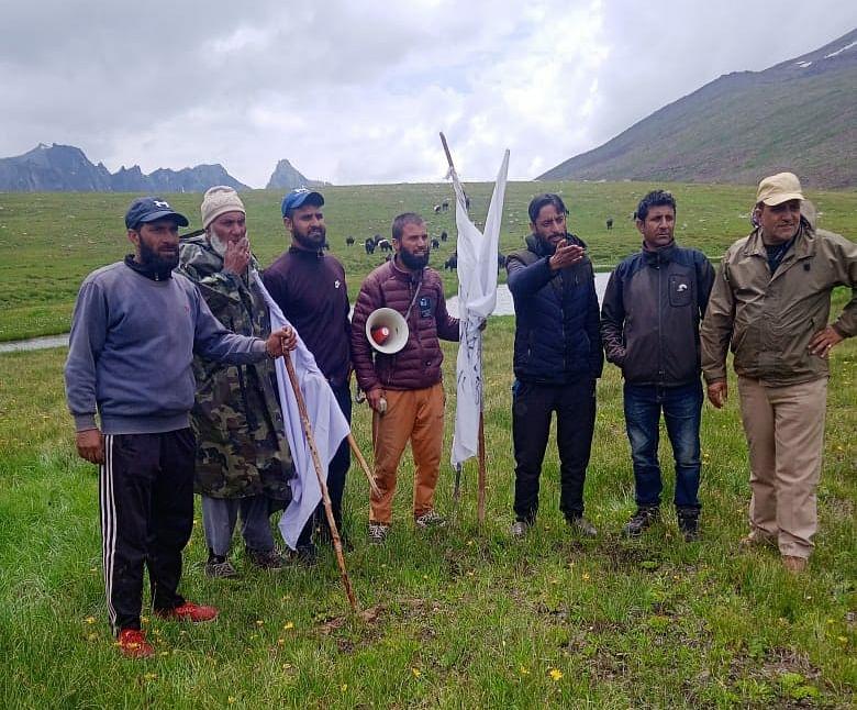 29 yaks brought back a week after crossing LoC in J&K's Gurez