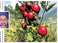 'Hi-density farming is as good as top notch corporate job'