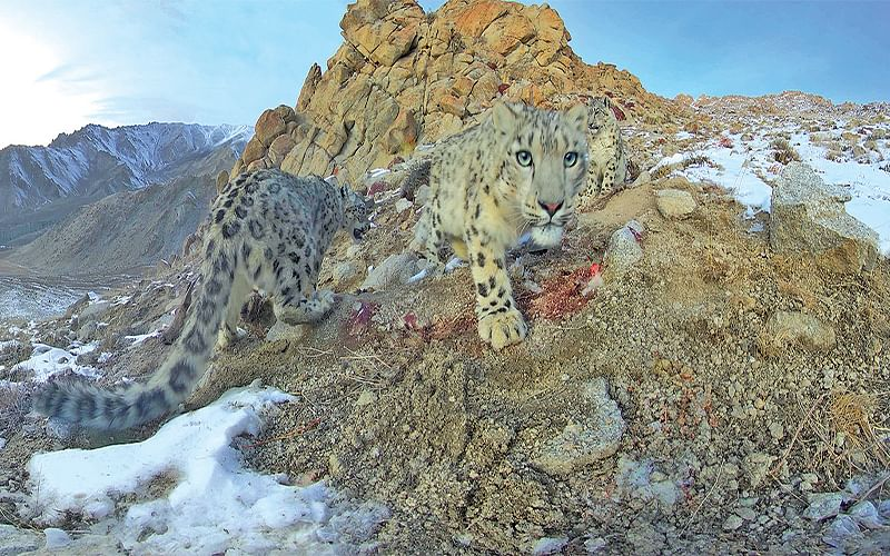 Towards conserving Ladakh