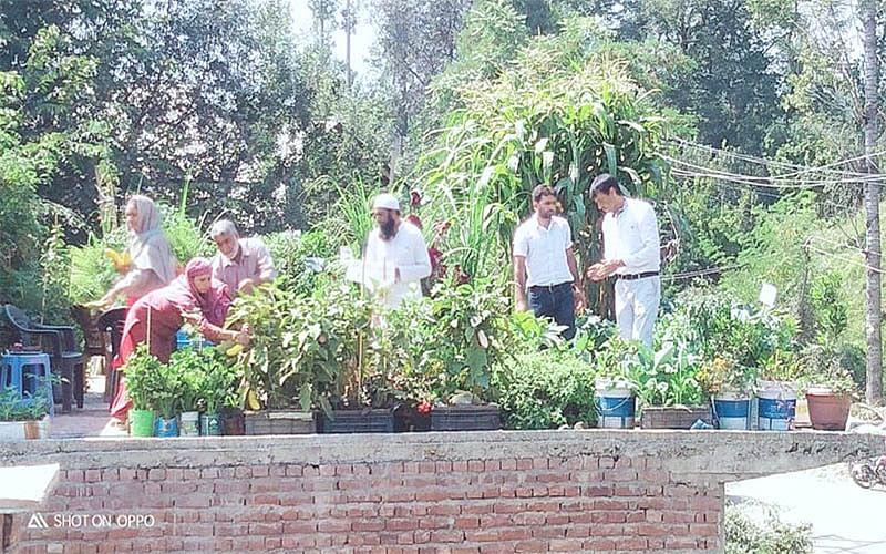 Shopian farmer inspired by online video starts rooftop farming