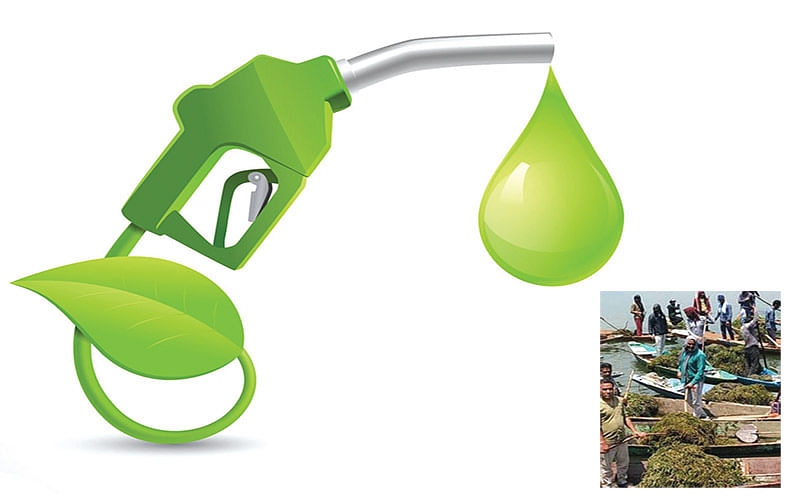 Government ropes in NAFED to 'weed out biofuel' from Dal, Nigeen lakes