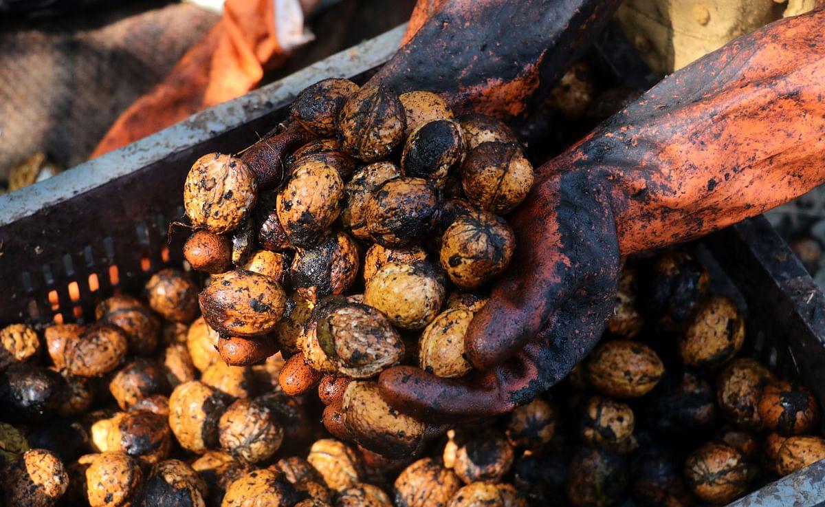 1st consignment of Kashmiri walnuts despatched to Bengaluru under ODOP initiative