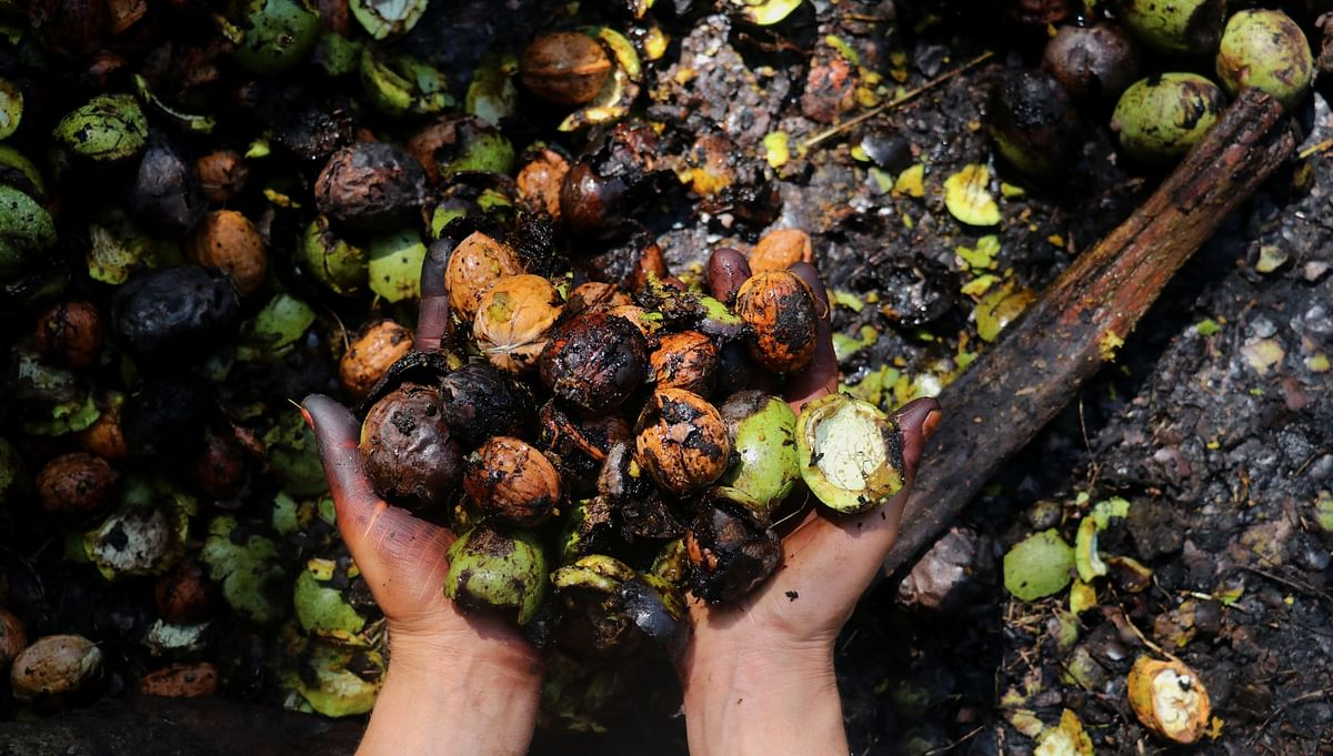 Locally called 'Dooyn', the trade of walnuts contributes considerably to the Kashmir's economy.