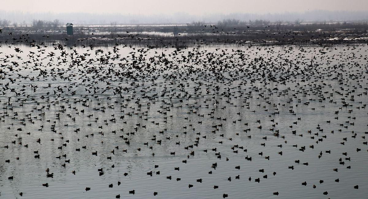 Govt frames action plan for conservation of wetlands in Kashmir