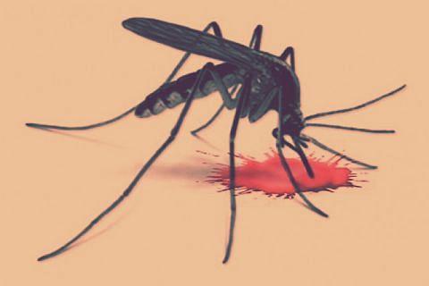 Dengue cases mount to 441 in Jammu region