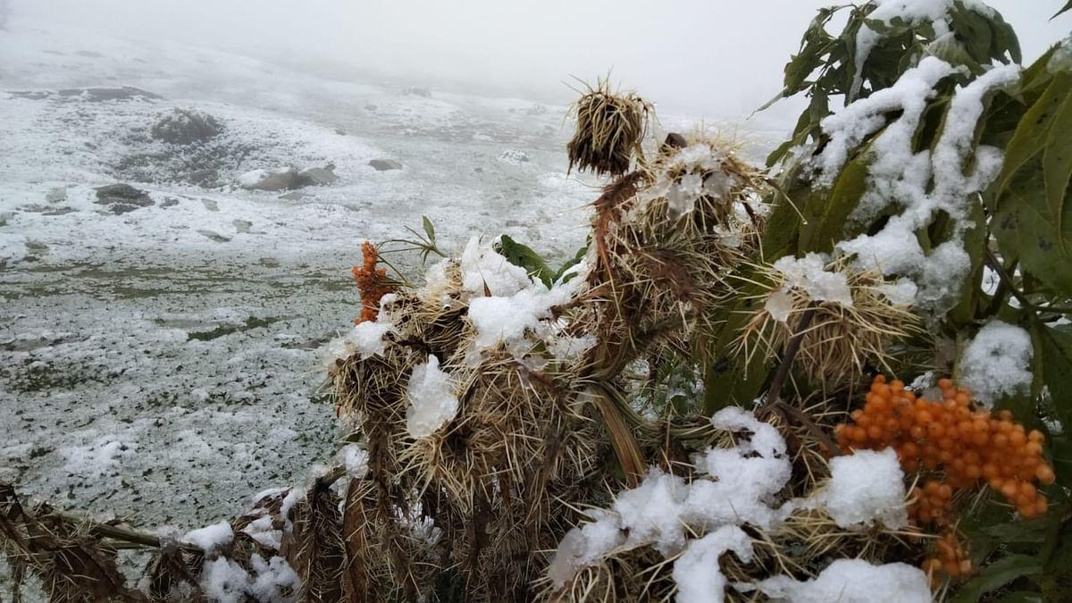 Higher reaches in J&K, Ladakh receive season's first snowfall