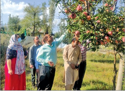 Hailstorm affected farmers in Kupwara will be compensated: DG Horticulture