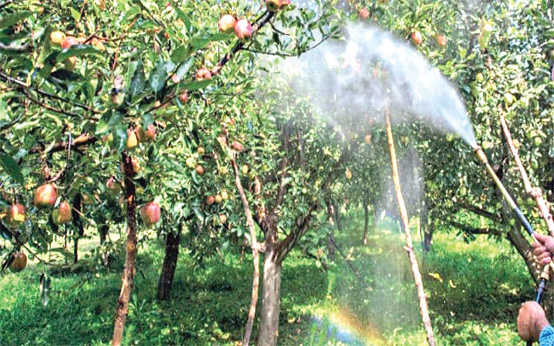 Managing an Orchard