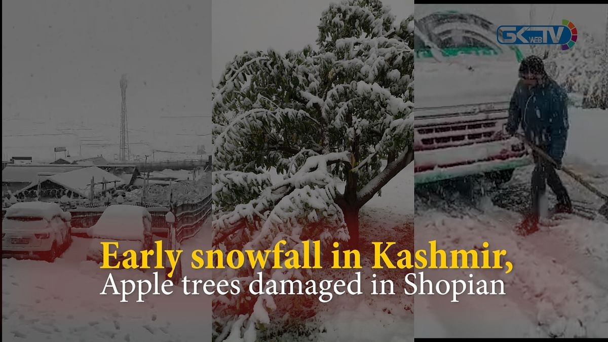 Early snowfall in Kashmir, apple trees damaged in Shopian