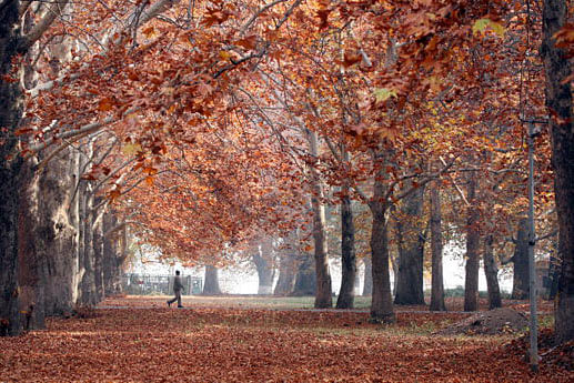 The Mystic Autumn of Kashmir Valley