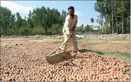 First consignment of 2000 kgs Kashmir walnuts despatched under ODOP initiative