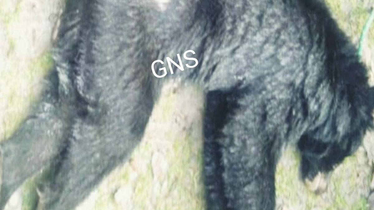 Wildlife Dept accused of negligence as black bear dies in well in Lolab
