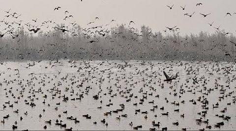 Wildlife Department prepares Gharana Wetland's 10-year management plan