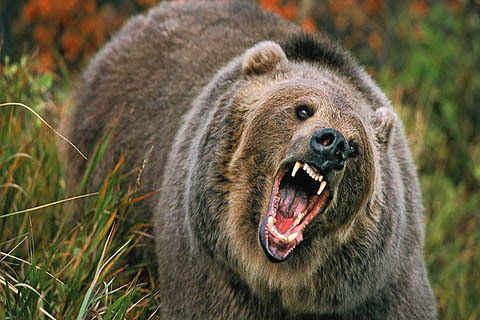 Man injured in bear attack