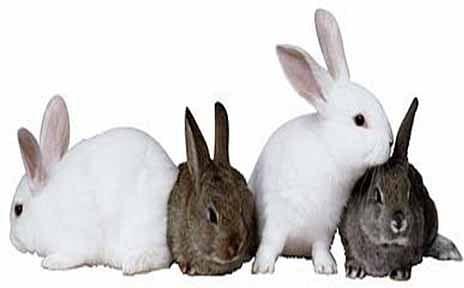 Rabbit Farming: A potential Lucrative Enterprise