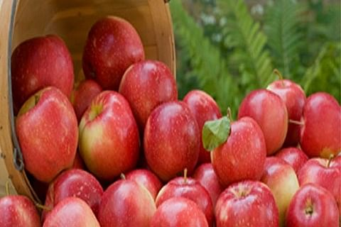 Fruit growers demand2,900 cr flood relief package