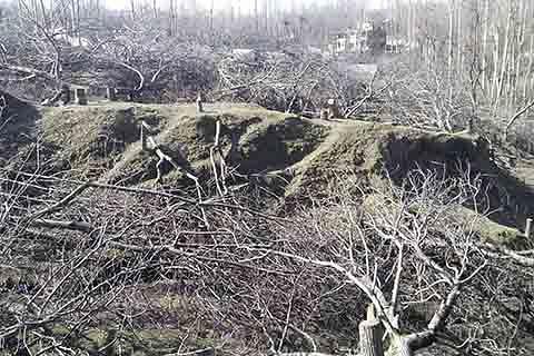 60 walnut trees axed in Shopian