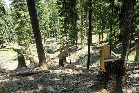 Wildlife deptt officials dump illegal timber in Pahalgam sanctuary; suspended