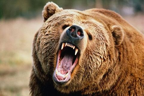 Bear mauls man to death in Anantnag, injures two others