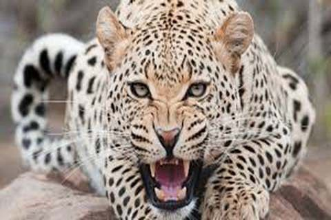 Wild animals on rampage