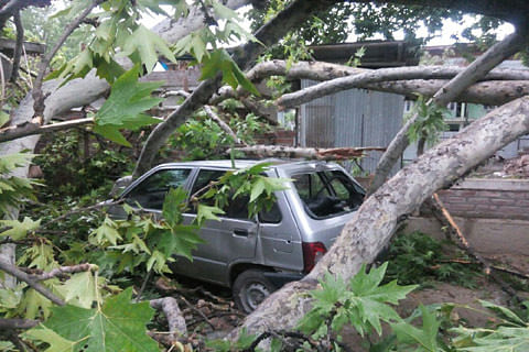 High winds damage houses, down trees in Pulwama