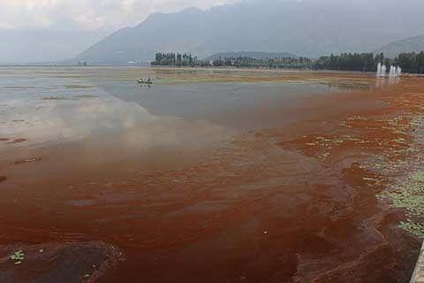 Weeds, Red bloom engulf Dal Lake