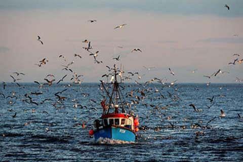 Govt for promoting fish farming in JK