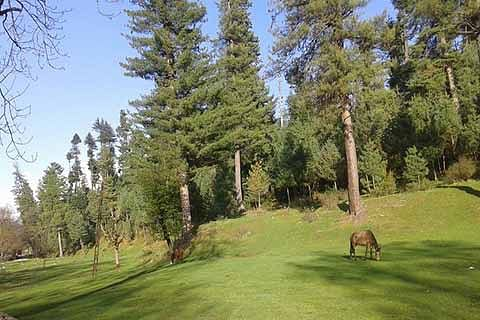 City forest to be developed as tourist attraction
