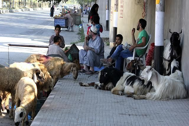 Observe Eid-ul-Azha with austerity: AAC urges people