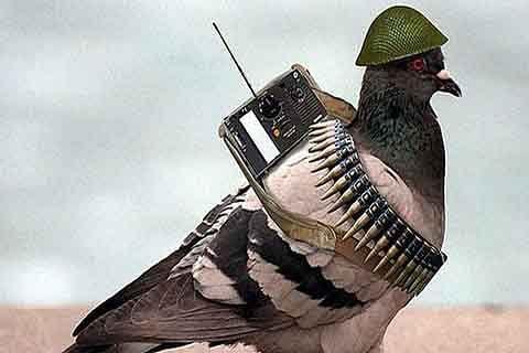 A Terrorist Bird