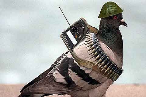 Pigeon found with 'threatening' message may soon be set free