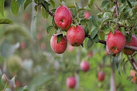'Massive surge in fruit export'