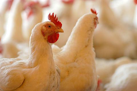 Bird Flu:  Govt for appropriate preventive measures