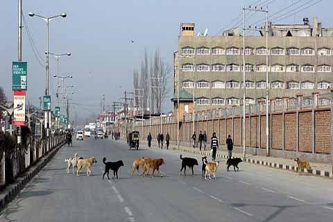 Stray dogs on prowl, authorities in slumber