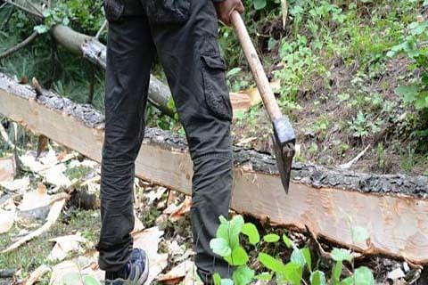 11 timber smugglers surrender in Shopian