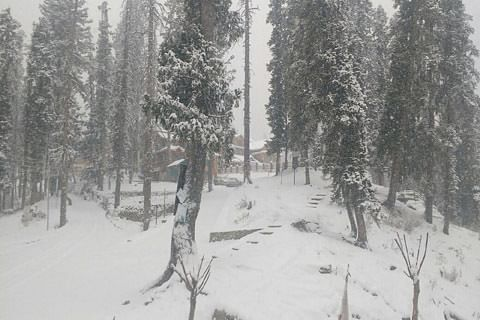 Video: Fresh snowfall brings tourism right on track in Kashmir