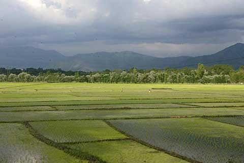 'Kashmir has net sown area of 3.11 lakh ha'