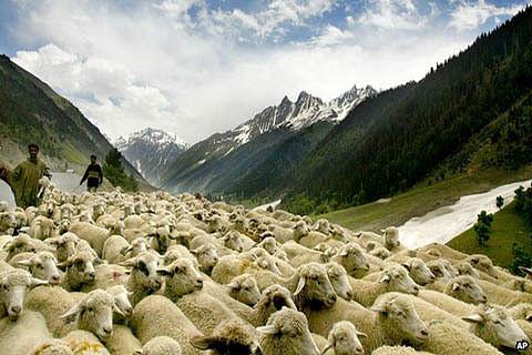 Perishables, livestock worth crores stranded on highway