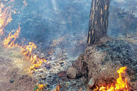 Firefighters, locals fight forest fire in Uri village
