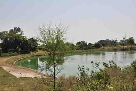 Karnataka: Six of family jump into pond; suicide pact suspected
