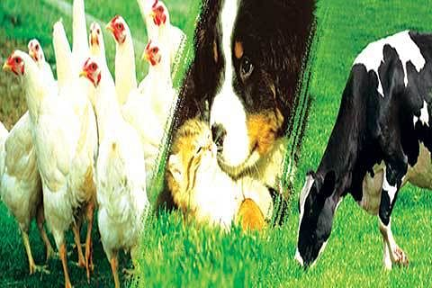 Animal Health: Our Role & Responsibility