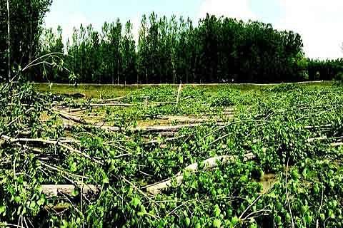 Restoration of Narbal flood spill channel begins