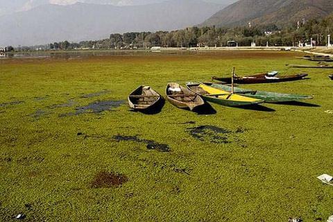 Experts express concern over deteriorating environment of Kashmir