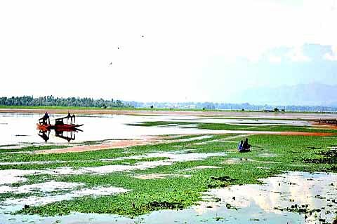 Governor inspects Dal lake, says half of water surface invisible