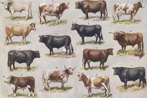 Govt constitutes monitoring committee to promote bovine breeding