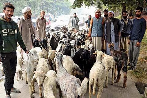 Gujjars protest outside forest minister's residence along with livestock
