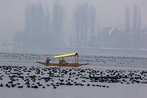 HC seeks water sample analysis report on Dal Lake