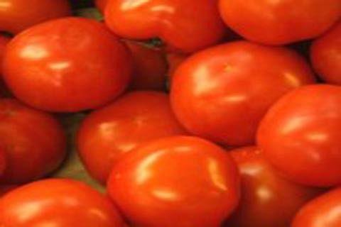 Israeli co develops tiniest cherry tomato