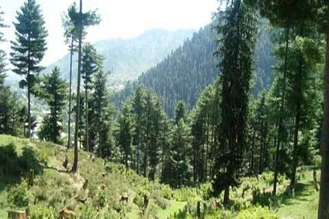 Centre notifies draft rules for Compensatory Afforestation Fund Act