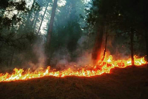 Major fire in Bhaderwah forests; doused